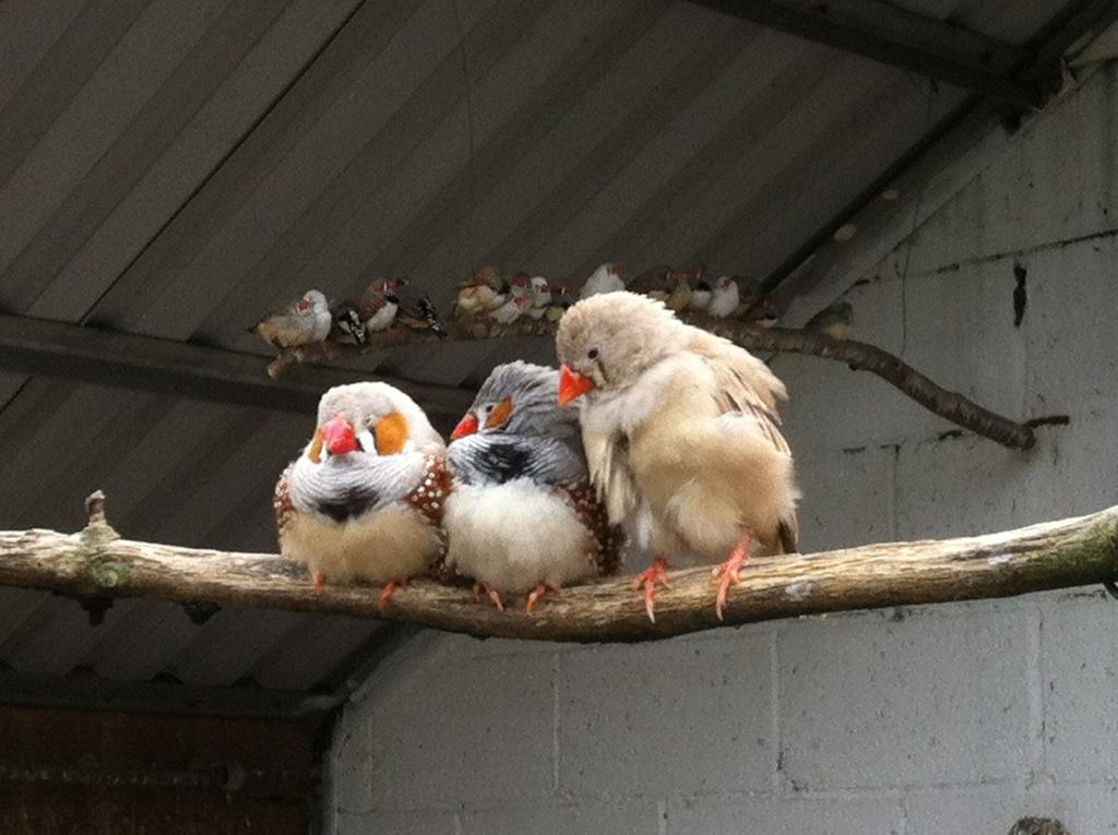 Birds huddle